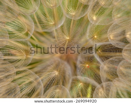 Extreme closeup in spring, abstract nature background of dandelion flower (taraxacum) - stock photo