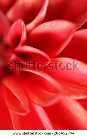 Extreme closeup of beautiful orange dahlia flower - stock photo