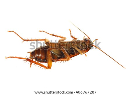 Extreme Depth of Field Photo of a Dead Cock Roach Isolated on White