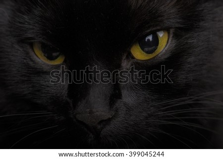 Extreme Macro Close Up of Face of Domestic Black Pet Cat with Mesmerizing Yellow Eyes Staring Watchfully