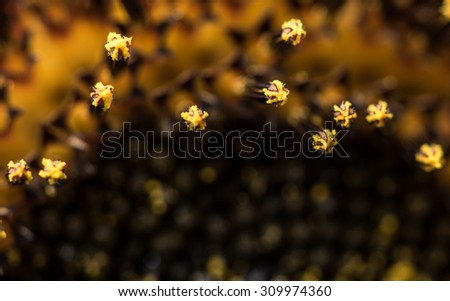 Extreme macro photo of a sunflower pistil. Sunflower Pistil. - stock photo