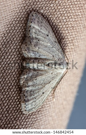 extreme macro shot of a small moth sitting on fabric - stock photo