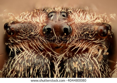 Extreme magnification - Spider eyes, front view, arrangement - stock photo