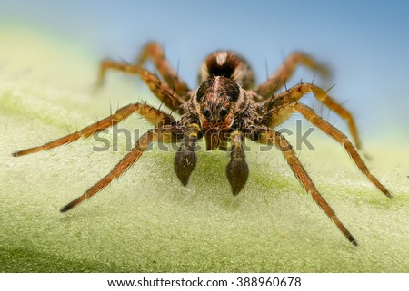 Extreme magnification - Spider on a leaf, front view - stock photo