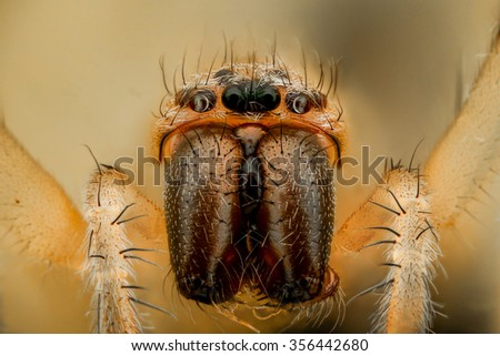 Extreme magnification - White spider, front view - stock photo