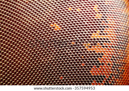 Extreme sharp and detailed fly compound eye surface taken at extreme magnification with microscope objective stacked from more photos into one sharp photo