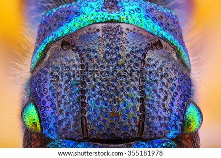 Extreme sharp and detailed study of 6 mm Cuckoo wasp body (Holopyga generosa) taken with 10x microscope objective stacked from many shots into one very sharp photo.  - stock photo