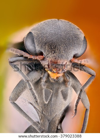 Extreme sharp and detailed study of unknown insect creature stacked from many images into one very sharp photo. - stock photo