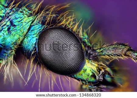 Extreme sharp closeup of compound eye of insect showing ommatidium facets viewed under microscope with high power magnification.