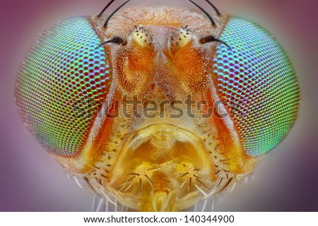 Extreme sharp macro portrait of small fly head taken with 25x microscope objective stacked from many shots into one very sharp photo - stock photo