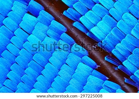 Extreme 10x magnification of Morpho Rhetenor Cacica butterfly wing - stock photo