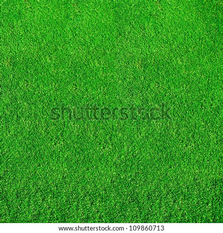 Extremely green grass