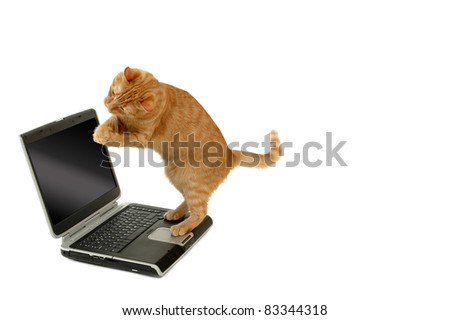 Extremely happy cat is standing on a laptop