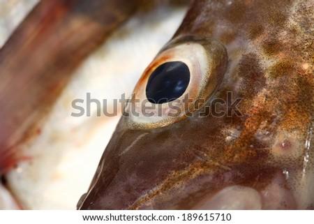 Eye cod fish background nature - stock photo