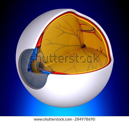 Eye Cross Section Real Human Anatomy - on blue background - stock photo