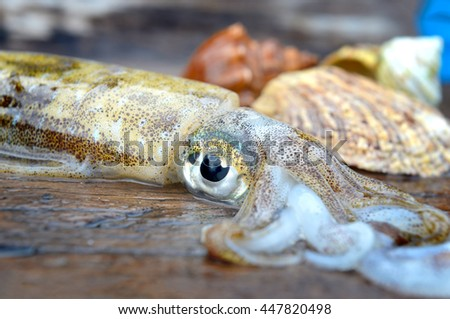 Eye focusing of Fresh and life soft cuttle fish from fishery market in Thailand photo in outdoor cloudy lighting.