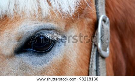 eye horse - stock photo