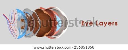 Eye layers - stock photo