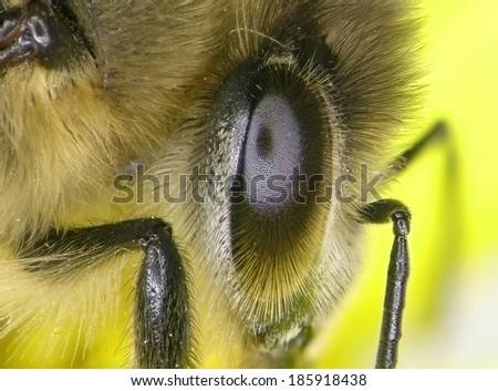 Eye of a bee. Macro. - stock photo