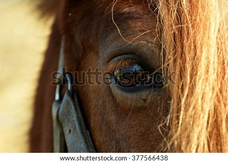Eye of a brown horse - stock photo