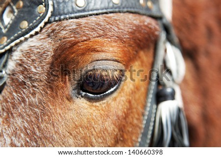 Eye of a horse close up.