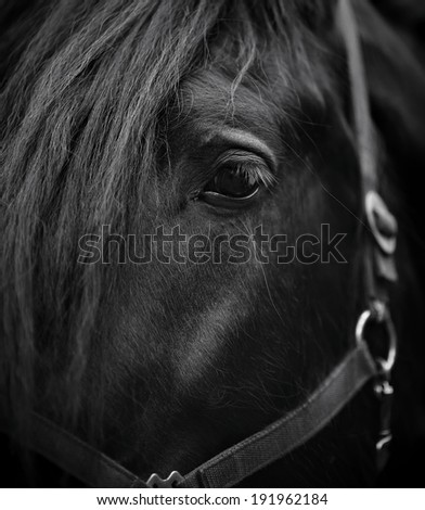 Eye of a horse. Muzzle of a horse. Stallion. Portrait of a horse. Thoroughbred horse. Beautiful horse. - stock photo