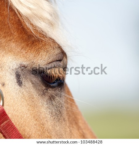 Eye of a red horse with a light mane against the sky - stock photo