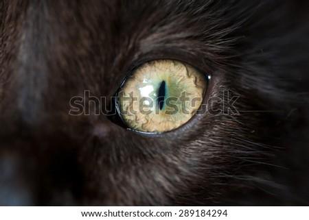 Eye of black cat closeup. Macro shot. - stock photo