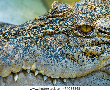 eye of crocodile - stock photo