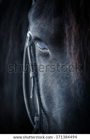 Eye of Friesian horse