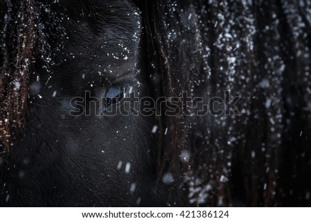 Eye of Friesian horse. Closeup of horse eye. - stock photo