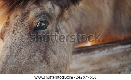 eye of Horse - stock photo