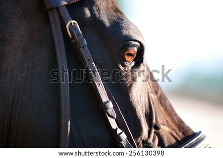 Eye of horse in sunlight - stock photo