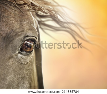Eye of horse with mane in sunlight - stock photo