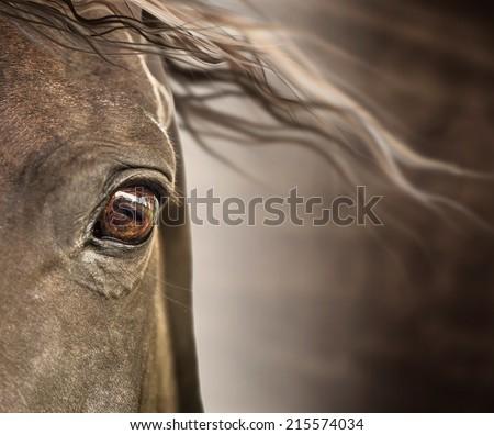 Eye of horse with mane on dark background  - stock photo
