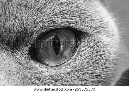 eye of the cat macro - stock photo