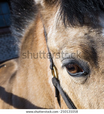 eye of the horse close-up - stock photo