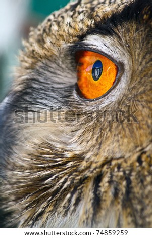 Eye of the Sun, an Owl perched on a warm spring evening with it's eye a beautiful glowing orange, resembling the surface of the sun.