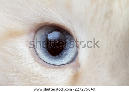 eye on the white background - stock photo