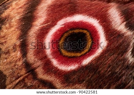 Eye spot on the wing of Saturnia moth Athletes