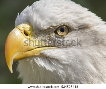 eye to eye with eagle