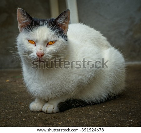 Eyes - A snapshot of cat in the backyard - stock photo