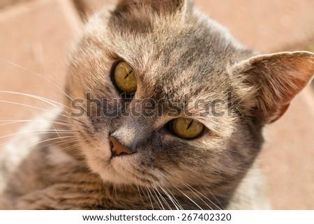 Eyes cat portrait - stock photo