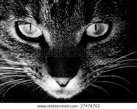 Eyes of a cat - stock photo