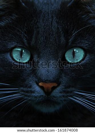 eyes of blue cat - stock photo