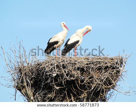 eyrie of stork - stock photo