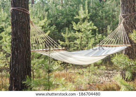 fabric hammock strung between two pines in forest - stock photo