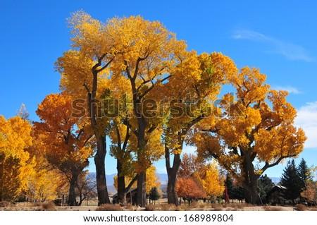 Fabulous display of Fall colors, Nevada - stock photo