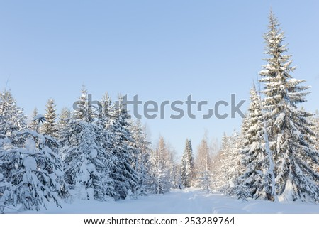 Fabulous winter forest on background of blue sky