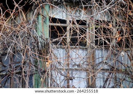 Facade of an abandoned wooden house covered with overgrown vegetation - stock photo